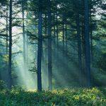 Χαρίζουν τα ελληνικά δάση σε καταπατητές! Έγκλημα
